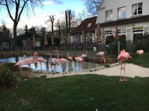 Flamingos im Tierpark Bochum Foto: Ruhrgebietaktuell/Janine Sauer-Crepulja