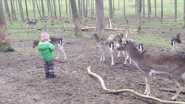 Ausflugsziele Ruhrgebiet - Wildpark Granat in Haltern am See