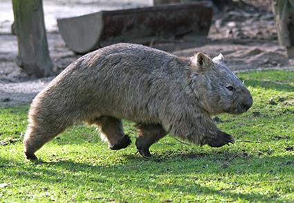 Foto: Zoo Duisburg, Kuster/www.zoo-foto.de