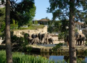 Zoo Köln Elefanten