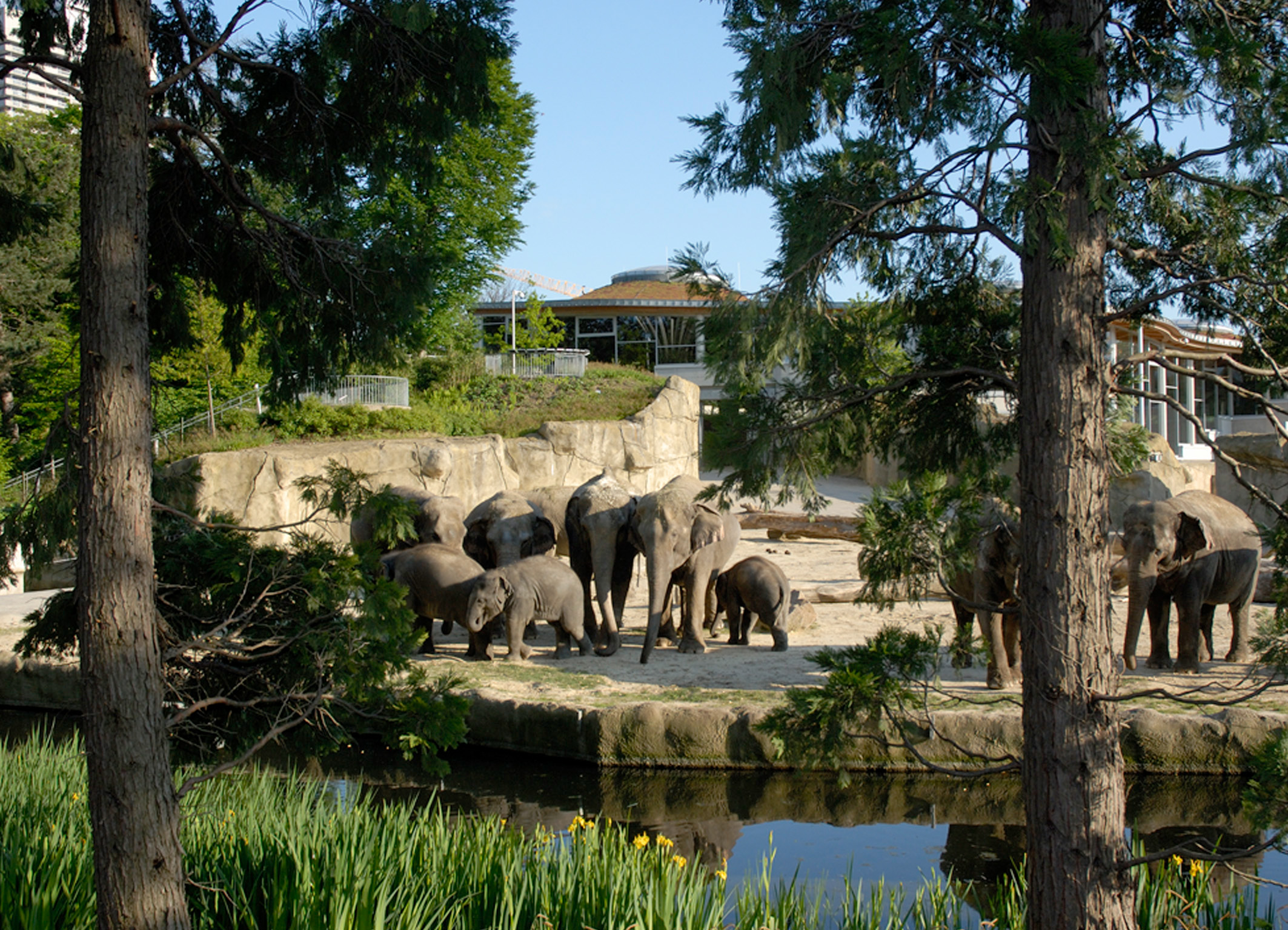 ©Zoo Köln Elefanten