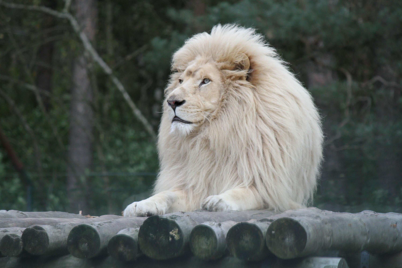 ©Zoo Safaripark Stukenbrock
