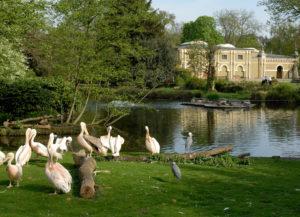 Zoo Köln Flusspferdhaus