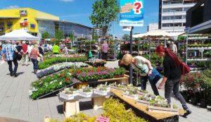 Eine riesige Auswahl an Pflanzen und Dekorationsartikeln findet man auf dem Blumen- und Gartenmarkt Herten Foto: Veranstaltungsagentur Prinz