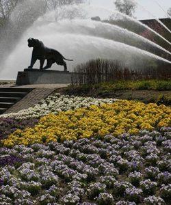 Bereits am Haupteingang des Parks wird man von einem traumhaften Blütenmeer empfangen. Foto © Grugapark Essen